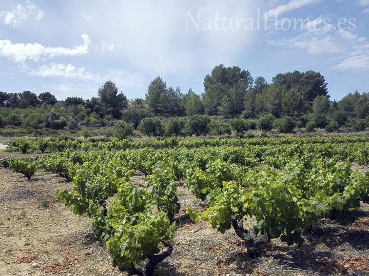Vineyard for sale in Jalon